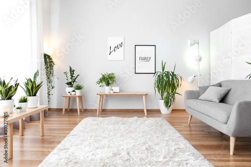 Cuadros en Lienzo Stylish interior of living room with green houseplants