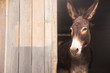 Donkey sticking out of the barn. Space for writing