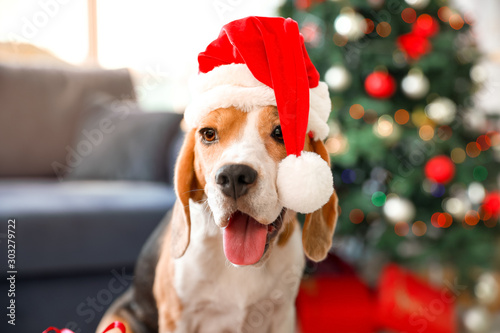 Foto  Cute dog with Santa hat in room decorated for Christmas