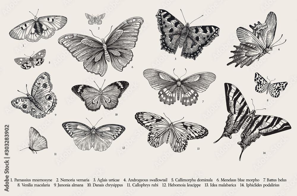 Motyle Zestaw elementów do projektu. Wektorowa rocznika klasyka ilustracja. Czarny i biały
