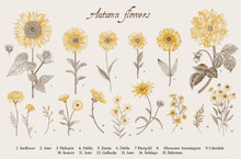 Vintage Vector Botanical Illus...