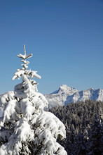 Beautiful View To The Snow Capped Mountains And Alps In Austria With Snowed In Trees