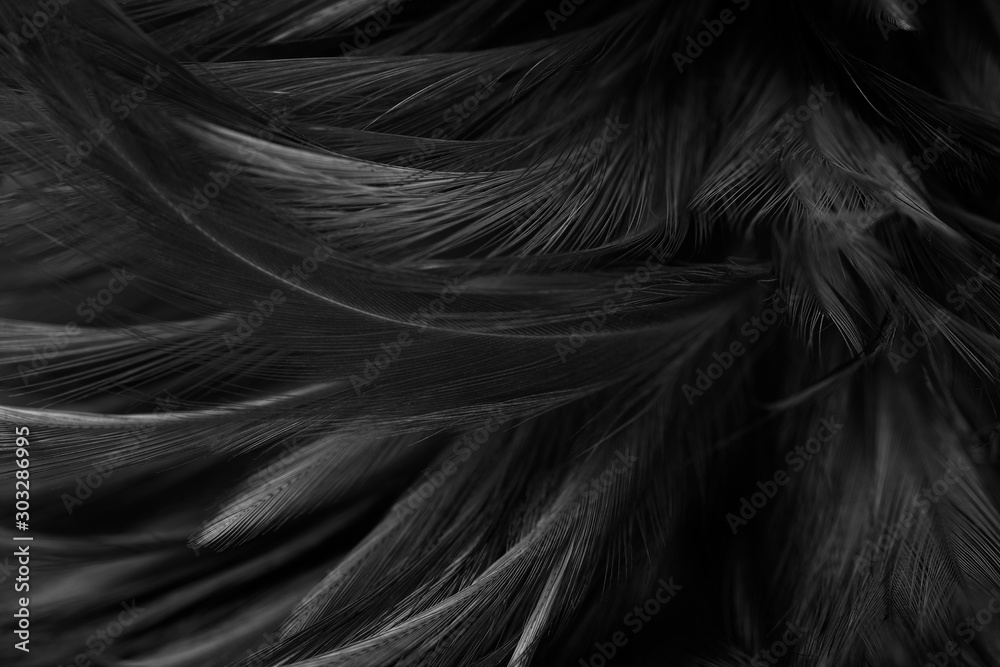 Beautiful dark black feather pattern texture background