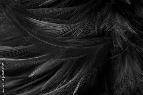 Fotomural  Beautiful dark black feather pattern texture background