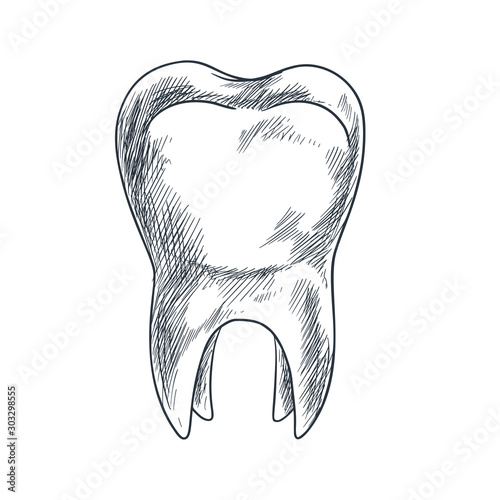 Hand drawn tooth with roots, sketchy style Wall mural