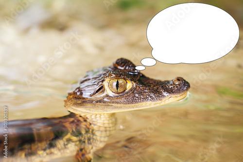 Soft focus funny picture young crocodile, alligator with bubble idea Canvas Print