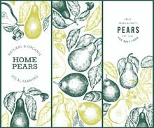 Pear Design Set. Hand Drawn Vector Garden Fruit Illustration. Engraved Style Garden Retro Botanical Banner.
