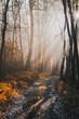 Leinwanddruck Bild - Magical Sunlight in Autumnal Forest at Misty Morning