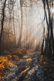 Magical Sunlight in Autumnal Forest at Misty Morning