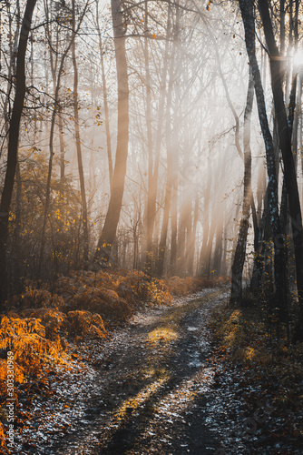 Spoed Foto op Canvas Weg in bos Magical Sunlight in Autumnal Forest at Misty Morning