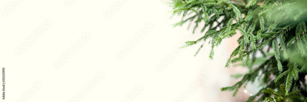 Fototapety, obrazy: Banner of green spruce branches as a textured background. Beautiful branch of spruce with needles. Christmas tree in nature. Space for text on the left of the frame on a yellow background
