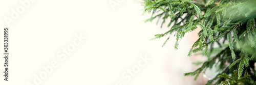 Obraz Banner of green spruce branches as a textured background. Beautiful branch of spruce with needles. Christmas tree in nature. Space for text on the left of the frame on a yellow background - fototapety do salonu