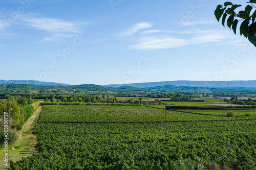 Cuadros en Lienzo Green vineyards on the outskirts of the village
