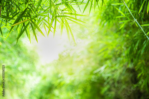 Obraz Closeup beautiful view of nature green bamboo leaf on greenery blurred background with sunlight and copy space. It is use for natural ecology summer background and fresh wallpaper concept. - fototapety do salonu