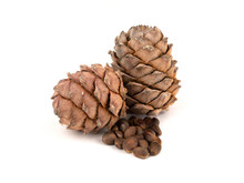 Two Pine Cones Tith Nuts On A White Background