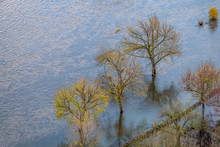 River Flood With Trees