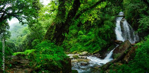 Foto auf AluDibond Grun Tropical jungles of Southeast Asia in august