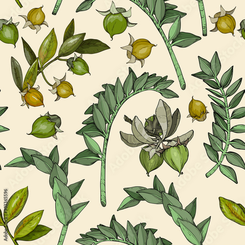 Samless pattern with jojoba nuts, branch and fruit Tablou Canvas