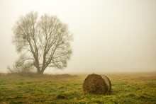 Tree Without Leaves, Hay Bale ...