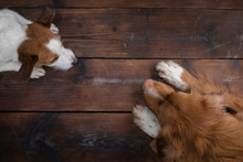 Flat Lay Dog. Paws On Wooden B...