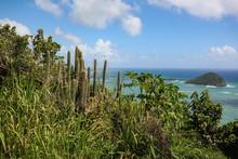 St. Lucia Blick Auf Das Karibische Meer