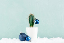 Funny Cristmas Cactus Decorated With Blue Christmas Balls With Snow