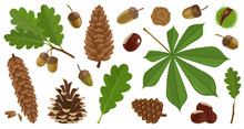 Acorn Of Oak Cartoon Vector Se...