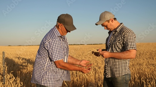 Obraz Businessmen take pictures of millet on a tablet and send it to the manufacturer s website. An agronomist and a farmer work in a field checking wheat grain for quality. Harvesting cereals. - fototapety do salonu