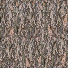 Pine Tree Bark Seamless Texture