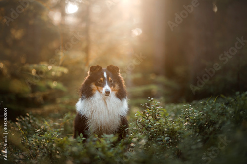 dog in forest Wallpaper Mural