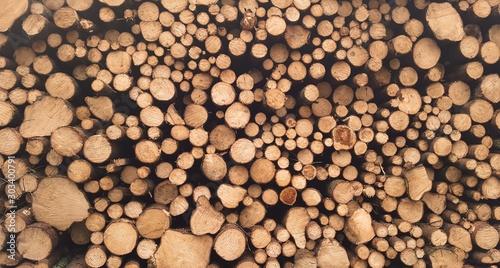 Fotobehang Brandhout textuur The Wood
