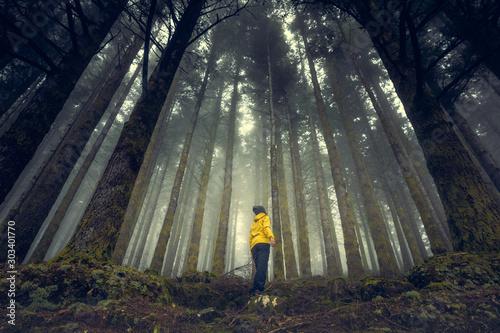 Fotografie, Tablou Enjoying the forest