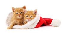 Kittens In The Hat Santa.