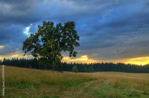 Majestic tree in the middle of meadow at blue romantic sunset.