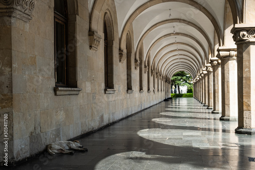 Fototapety, obrazy: Dog sleeping under the portico in very warm weather