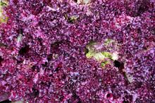 Purple Leaf Background Of Lett...