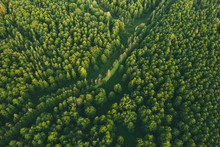 Aerial View Of Green Forest La...