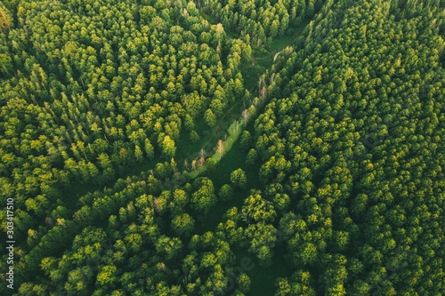 Leinwand Poster Aerial View Of Green Forest Landscape