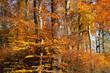 Bunter Herbstwald mit Laubbäumen und gelben Blättern - Stockfoto
