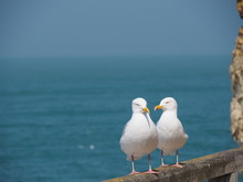 Seagulls Posing At The Beach