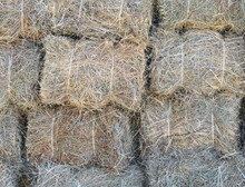 Dry Grass Background. Freshly Cut And Baled Hay Stacked To Dry