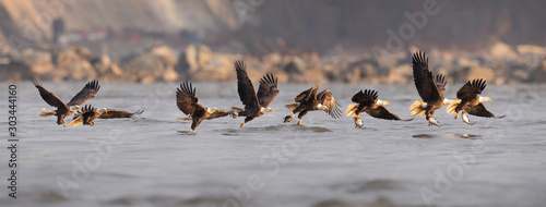 Fotografie, Tablou Bald Eagle Fishing