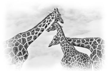 Panel Szklany Zwierzęta giraffes against the blue sky