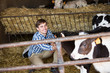 Man touching cows in cowshed
