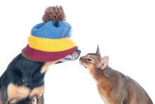 Blind Date Concept. Funny Photo Of A Cat And A Dog Sniffing Each Other, Isolated On White.