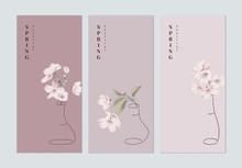 Set Of Spring Festival Brochure Cover Template Design, Pink Sakura Flowers In Outline Vase On Different Pink Background