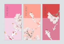 Set Of Spring Festival Brochure Cover Template Design, Pink Sakura Flowers And Koi Fancy Carp, Pink Tones