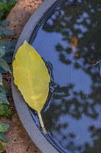 A Leaf Floats In The Water Of ...