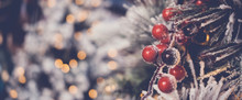 Red Holly Berries And Christmas Tree With Festive Defocused Bokeh, Holidays Background