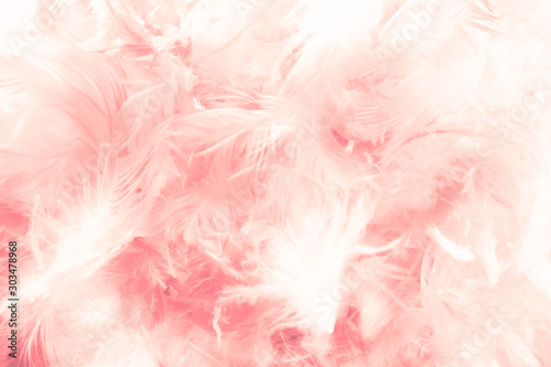 Beautiful abstract colorful white and orange feathers on dark background and soft white pink feather texture on white pattern - 303478968